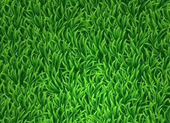 grass background clipart - photo #38