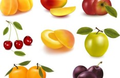 Fresh Fruits Vector Illustration