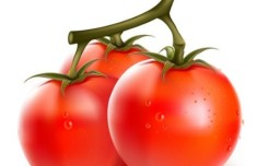 Vector Fresh Tomatoes