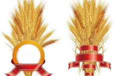 Wheat Stalks Design Materials Vector
