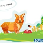 Cute Cartoon Welsh Corgi Illustration Vector