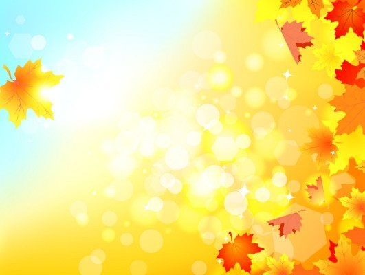 Autumn season maple leaves sunshine sunlight halos yellow leaves