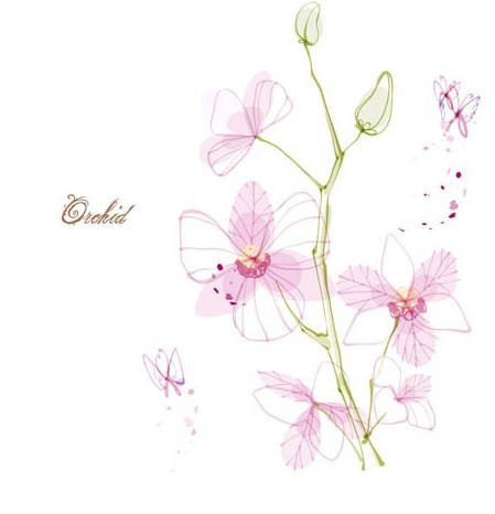 free hand drawn pink orchid vector illustration titanui