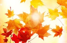 Free Autumn Graphic Design Resources