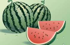 Summer Fresh Watermelon Vector